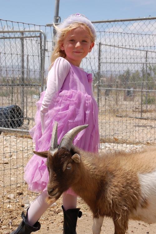 Flip Flop Ranch   Family Farm Stay